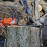 Lex Szyszko – o zezwoleniu na wycięcie drzewa
